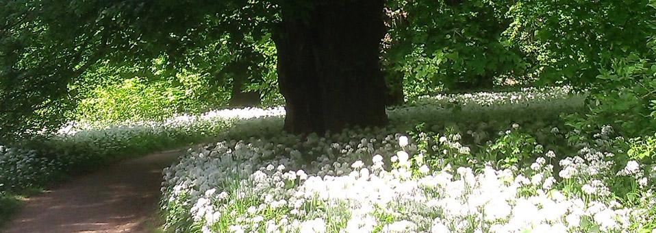 Park Putbus im Sommer
